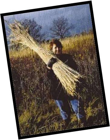 Fran Lee, original owner of the Strawbale Studio - harvesting reed 1998