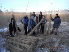 Harvesting reed (Phragmites Communis) in local field.