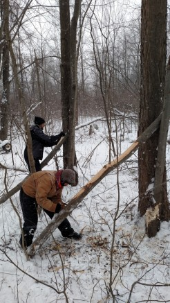 Jacob and Veneta using draw knifes to de-bark the recently felled tree.